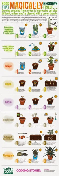 Use kitchen scraps to grow plants! Yes a lot of foods you disregard as not edible and∕or trash can in fact grow into a plant and give you…