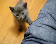 hey you #kittens