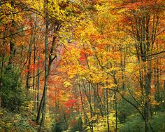 AUtumn in smoky mts - Google Search