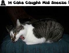 14 Cats Caught Mid Sneeze