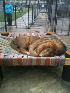 Thor likes his new napping spot - Big Cat = Big Kitten