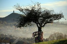 """"""" The tree in all its glory before it was hacked apart. Legend says it sprang from the staff of Joseph of Arimathea, the man who helped Jesus of the cross. To the right of the tree, in the distance, is Glastonbury Tor. Glastonbury Tor, Glastonbury England, Altar, Joseph Of Arimathea, Mists Of Avalon, Growing Tree, Pilgrimage, Faeries, Britain"""