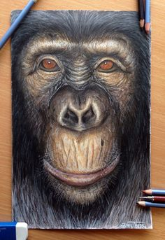 Ape color pencil drawing