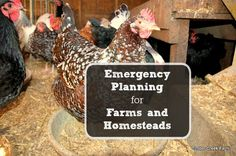 What if you can't make it back to your homestead? Do you have a contingency plan? http://timbercreekfarmer.com/emergency-planning-for-farms/