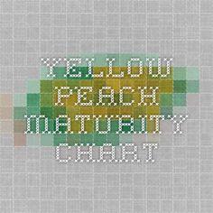 Yellow Peach Maturity Chart - to help identify your peach tree