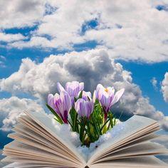 Πάντα θα είμαι ανοιχτό βιβλίο για όσους δεν τσαλακώνουν τις σελίδες μου.. Plants, Books, Colors, Libros, Book, Plant, Book Illustrations, Planets, Libri