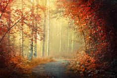 A foggy morning in Keuru, Finland. Autumn tress Tunnel of love by m-eralp on deviantART Tree Tunnel, Tunnel Of Love, Endless Night, Foggy Morning, Wonderful Picture, Mother Earth, Great Photos, The Great Outdoors, Places To Go