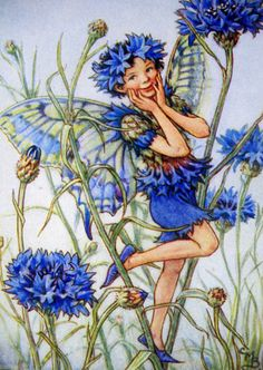 1930s CORNFLOWER FAIRY Ciciley Mary Barker by sandshoevintageprint