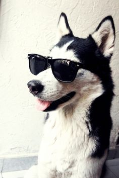 I don't know what possessed me to look up puppies wearing sunglasses, but he's so cute!