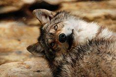 wolveswolves:Bydjsime