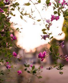道のりを記憶に残して: 秋の夕暮時とお花と紅葉シーン、2015年10月のまとめ/花・グリーンのある暮らし