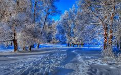 nature landscapes trees forest path trail foot prints hdr blue winter snow seasons cold frost