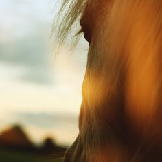 Such beauty and freedom in a horse.