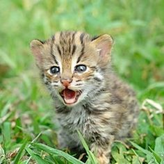 Adorable baby animals: Everyone loves them. But which young animals are actually the cutest? Until now, science has had no way to decide... But if you vote for the sweetest, most cuddly, most adorable baby animals on this CrowdRanked list - and make a list with your own suggestions - perhaps we can...