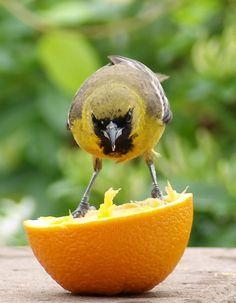 Fruit Feeder For Backyard Birds | Easy to Make Bird Fruit Feeder | The-Artistic-Garden's Blog