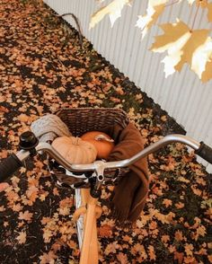 Fall Pictures, Fall Photos, November Pictures, Herbst Bucket List, Images Murales, Autumn Cozy, Autumn Fall, Autumn Leaves, Autumn Feeling