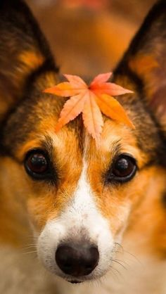stealing this idea for my pups - now to hunt down some awesome leaves on this property of mine...
