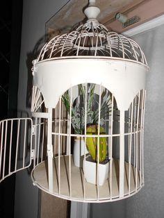Piantine in gabbia