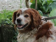 Adesso Aster sorride, e cerca casa! / Now Aster smiles and is looking for a good home! Per info: adozioni@leudica.org