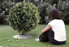 Poetree: A Funeral Urn That Lets You Plant A Tree From Ashes : TreeHugger
