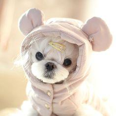 요즘 좀 소홀했다고 어찌나 삐졌는지 얘처럼 잘삐지고 잘풀리는애는 첨봤으 삐진얼굴도 귀여우니깐 산책가기전 #사진질 #독스타그램 #말티즈 #나군 #petstagram #ilovedog #instadog #dog #dogsofinstagram #pup #puppystagram #instadogbreeds #instasize #instapet #petscorner by choco4256