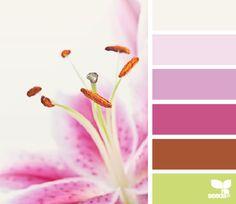 color sprung