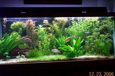 10 Tips on Designing a Freshwater Nature Aquarium Aquarium Design, Aquarium Setup, Live Aquarium Plants, Nature Aquarium, Aquarium Filter, Planted Aquarium, Tropical Fish Tanks, Tropical Aquarium, Saltwater Aquarium