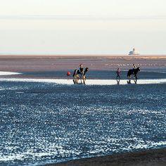 Horses on Cleethorpes Beach