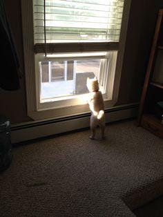 """""""Curious"""" Shiba"""