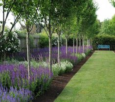 Front Yard Garden Design Awesome Fence With Evergreen Plants Landscaping Ideas 2 Landscaping Along Fence, Outdoor Landscaping, Landscaping Plants, Landscaping Ideas, Acreage Landscaping, Fence Plants, Landscaping Software, Outdoor Gardens, Hedging Plants
