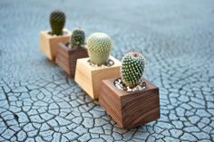 Of course this designer is from Portland.   Boxcar Planters  single Walnut or Ash by RevolutionDH on Etsy, $12.00