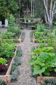 gravel pathways between raised gaden beds with water fountain, bird bath feature centered at the end. fruit trees lining the perimeters. Great plan for new house.