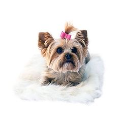 The Dog Squad's All Plush Crate Liner is the perfect soft blanket for your dogs kennel or anywhere around the house! The faux fur blanket comes in one size (12x16).The Dog Squad's All Plush Crate Line