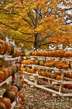"""Pumpkin Festival - *Keene, Cheshire County, New Hampshire*""  --  [Photographer John Greim]'h4d'992012"