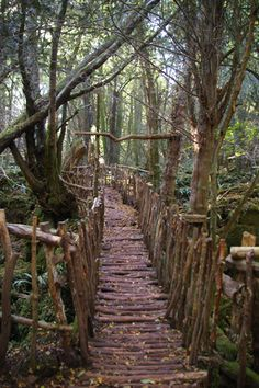 Puzzlewood is an ancient woodland site, near Coleford in the Forest of Dean, Gloucestershire, England
