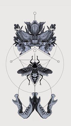 Géométrie animalière
