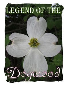 Now that spring is here, everything's in bloom! This story about Jesus and the dogwood tree really warmed my heart! I'll never look out my window at that beautiful tree again without thinking about Jesus' love for me. :)