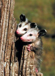 save wildlife essay