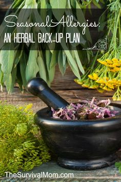 Herbs for Seasonal Allergies: An Herbal Back Up Plan - Survival Mom Natural Remedies For Allergies, Allergy Remedies, Natural Home Remedies, Healing Herbs, Medicinal Plants, Natural Healing, Holistic Remedies, Herbal Remedies, Health Remedies