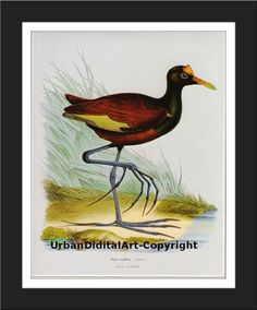 Vintage Bird ArtDownloadable  illustration of a by UrbanDigitalArt, $5.95