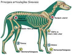 Cheapest Dog Boarding Near Me Product Anatomy Bones, Horse Anatomy, Vet Assistant, Pet Vet, Veterinary Medicine, Dog Boarding, Dog Friends, Dog Life, Pet Care
