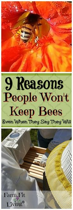 Want to start beekeeping? What's stopping you? Here's 9 reasons people won't keep bees even when they say they will. via @www.pinterest.com/farmfitliving