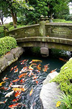Shitamachi Koi Koi by ippei + janine, via Flickr. Asakusa, Tokyo, Japan.