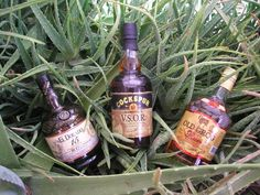 Rum & Aloes - Grenada Clarkes Court Old Grog - Barbados Cockspur VSOR - Guyana El Dorado 15 years - Serious rums of the Caribbean.