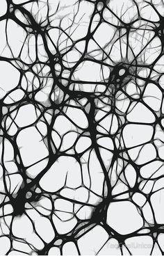 'Neuron Web' Photographic Print by TooCoolUnicorn Patterns In Nature, Textures Patterns, Theme Design, Art Grunge, Biology Art, Teaching Biology, Brain Art, Generative Art, Science Art