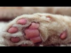 Pictures of cat feet accompanied by classical music https://www.youtube.com/watch?v=Y0p_BasJLKE