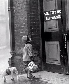 Strictly No Elephants ... - PHUNRISE