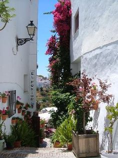 Flowery streets in the beautiful white villlage of Frigilana, Andalucía, Spain. Would you like to go there?              http://www.andalusie-zeezicht.nl/andalusie/la-axarquia/frigiliana