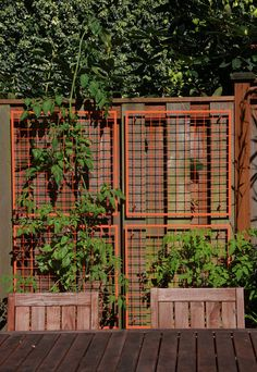 panels lined with welded wire mesh on the south side and cedar fencing on the north side. creates a screen you can trellis plants up. Love this idea to screen in my patio. Cedar Trellis, Wire Trellis, Trellis Panels, Cedar Fence, White Picket Fence, Bamboo Fence, Fence Gate, Fence With Lattice Top, Garden Privacy