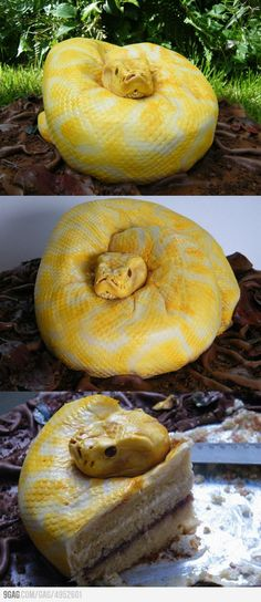 """I am obsessed with this cake.Scary Snake Cake from """"North Star Cakes"""" Cupcakes, Cake Cookies, Cupcake Cakes, Crazy Cakes, Fab Cakes, Snake Cakes, Scary Snakes, Piece Of Cakes, Creative Cakes"""